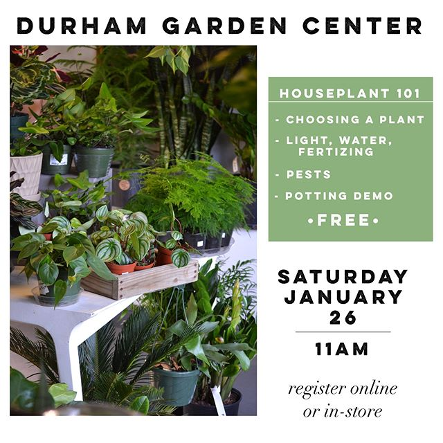 Mark your calendars for our Houseplant 101 workshop!🌵✨🌿Tag someone you want to come with!