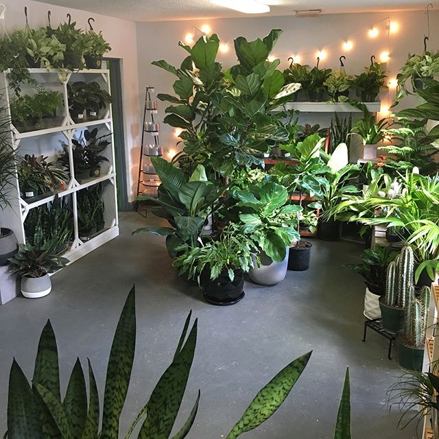 🤸🏼‍♀️It was a marathon to get all these plants put away and cleaned up before our Houseplant 101 this weekend! ⚡️See you there? *Come early, we are now standing room only!*