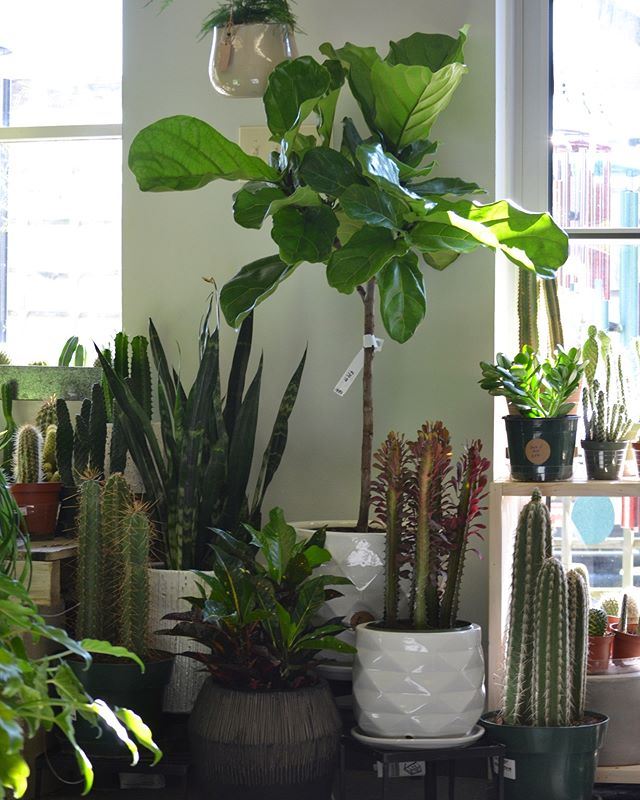 Thank you so much to everyone who came out for our Houseplant 101 last weekend! Now there's lots of room for new plants in the shop...😉✨🌿💚🙃