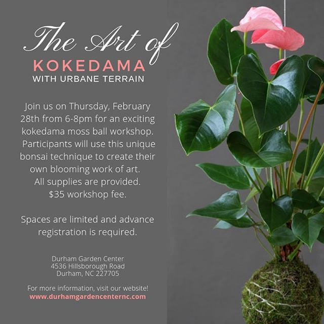 We are so thrilled to host Aisha from @urbaneterrain for our first ever Kokedama workshop! 😱Yes, you heard right. Space is limited, sign up online or in-store! 🌿✨