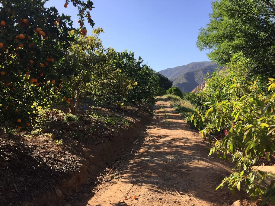 ojai orchard path.jpg