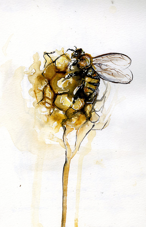 Bees and Honeycomb, Amanda Carlson