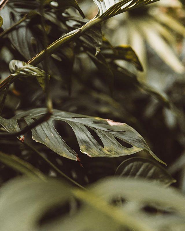 • Botanical appreciation. 🌿