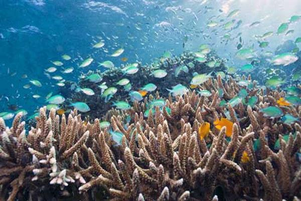 16_bali_menjangan_island_best_snorkeling.jpg