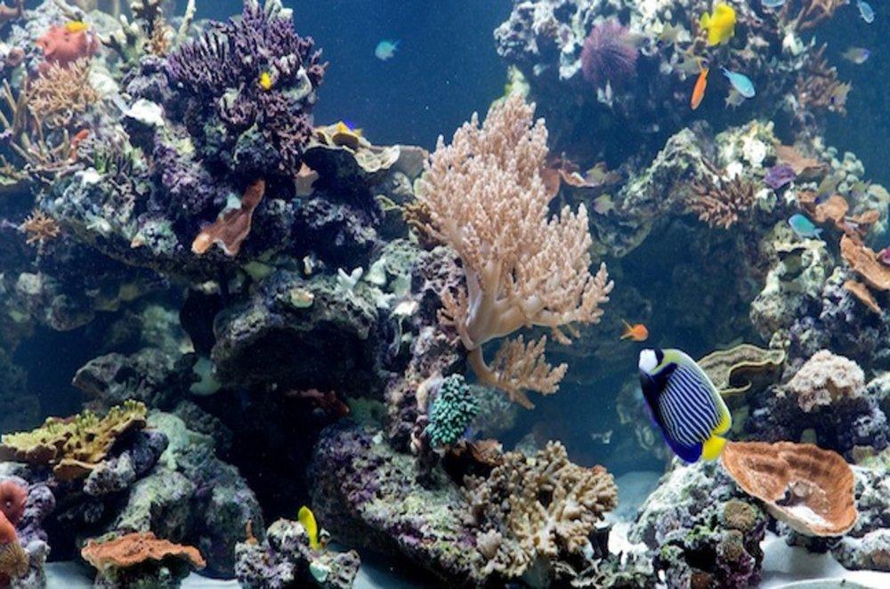 nhm_coral_reef_aquarium.jpg