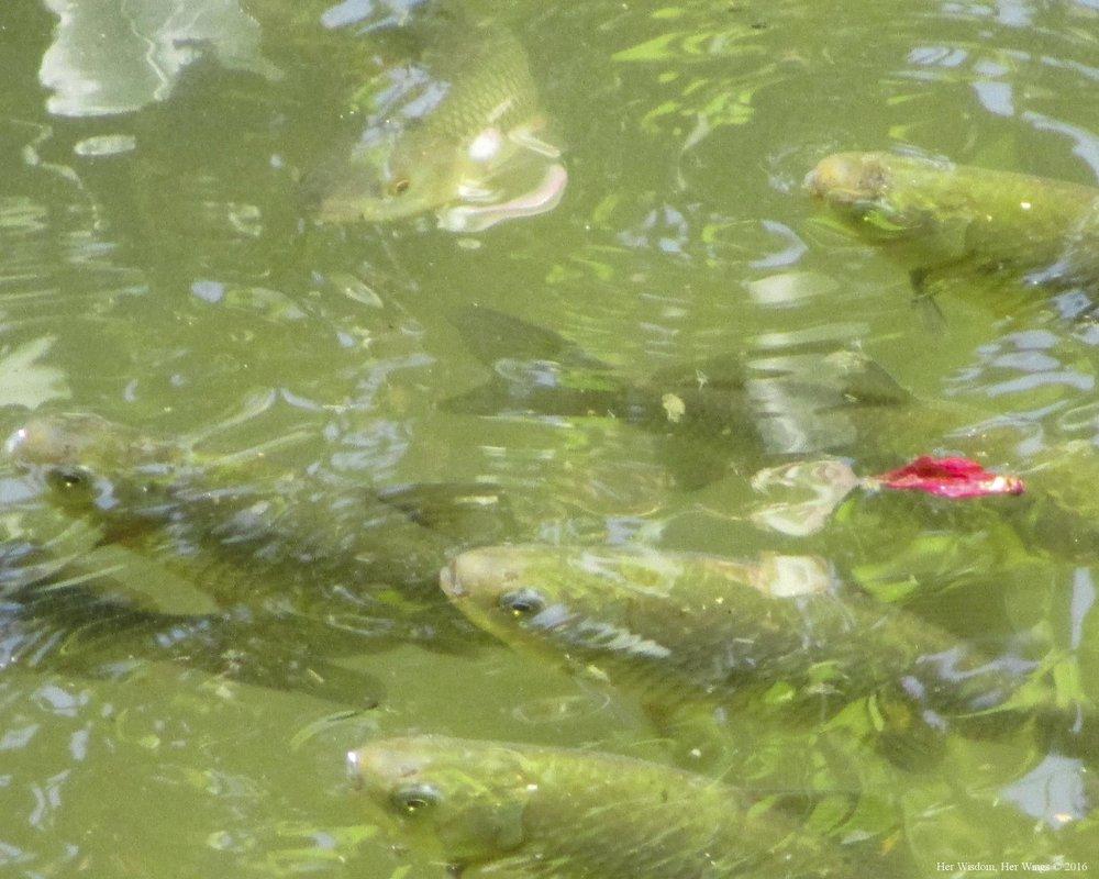 Moje Ribe, Moj Mir