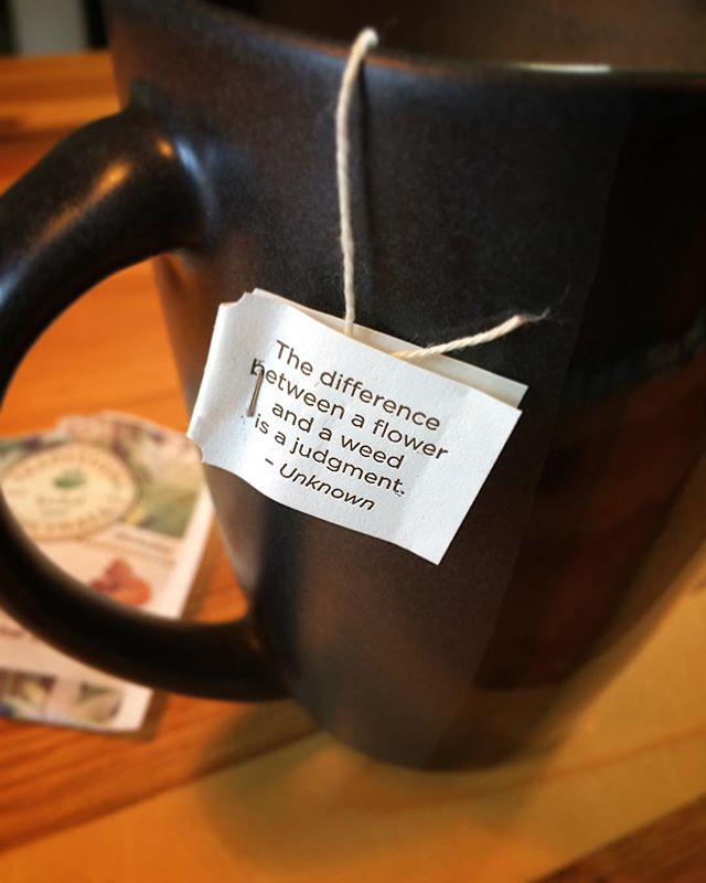 Profound words from @tradmedicinals.  #mindfulness in a #warmcupoftea #herbaltea #tumeric #meadowsweet #ginger