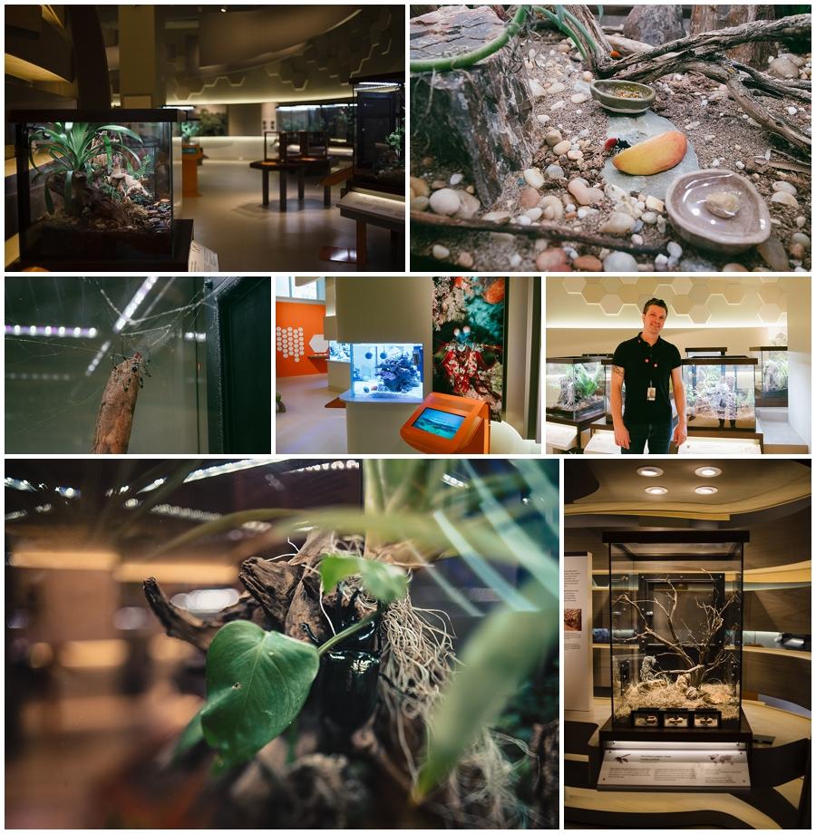 Bug Gallery, Royal Alberta Museum