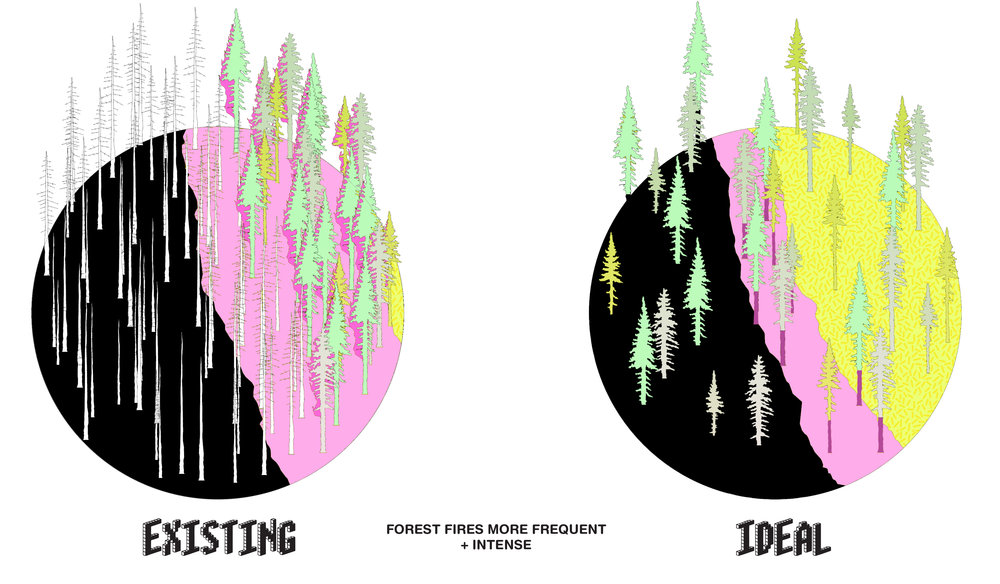 """With the nation's forest quadrupling in density, low-intensity surface fires have turned into high intensity wildfires. Suburban density complicates """"fire-wise"""" strategies for home protection."""