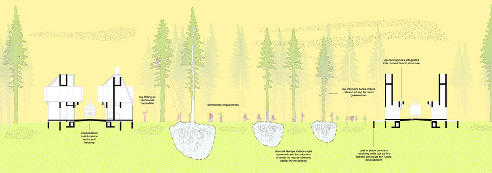 Successional forest and maintenance route integration.