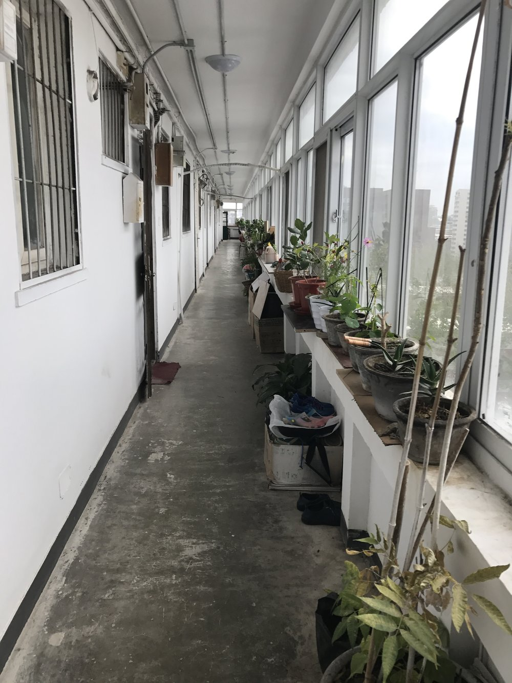 My hallway. I love the plants. The Chinese keep nature close, even in the city.