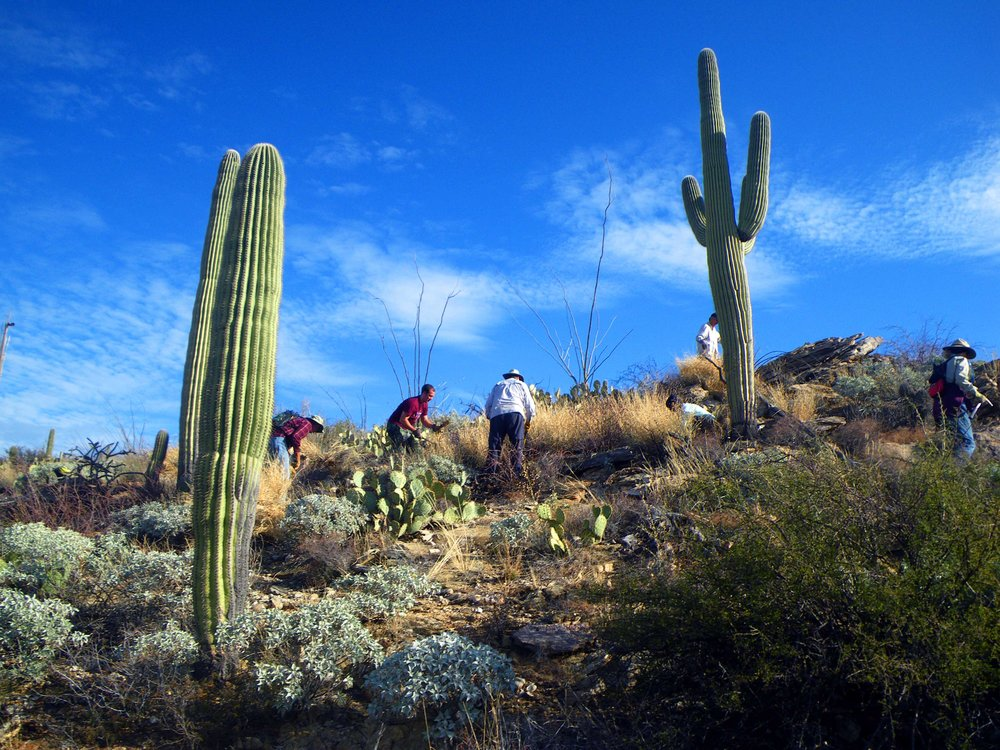 Volunteers at Saguaro N.P.