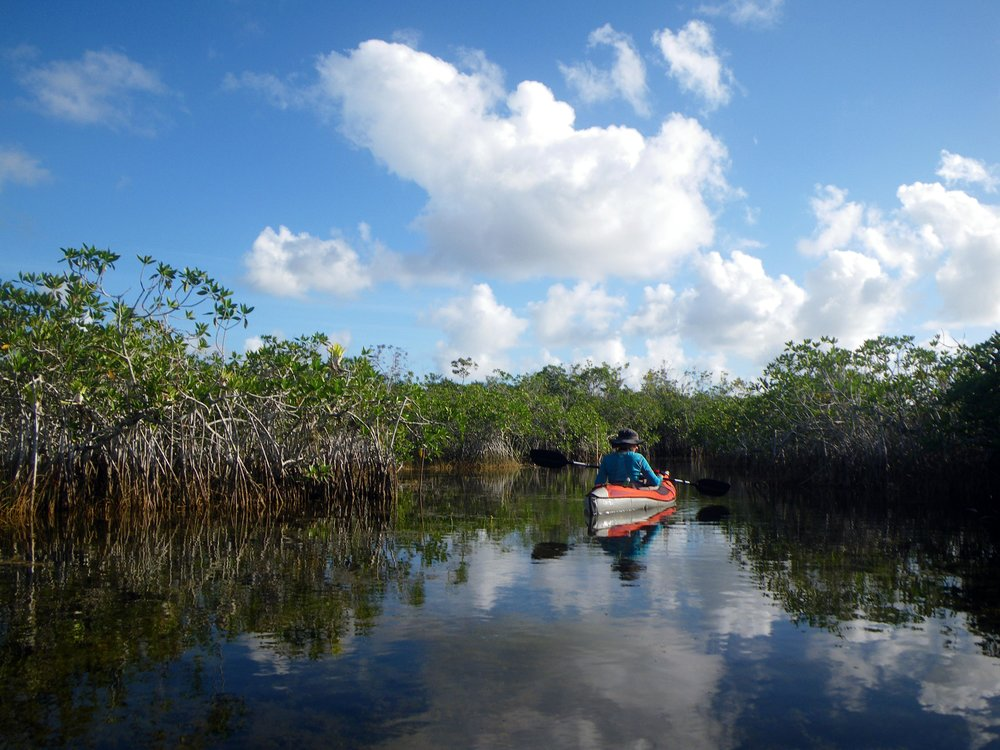 Mangroves - Photo by Tim Giller
