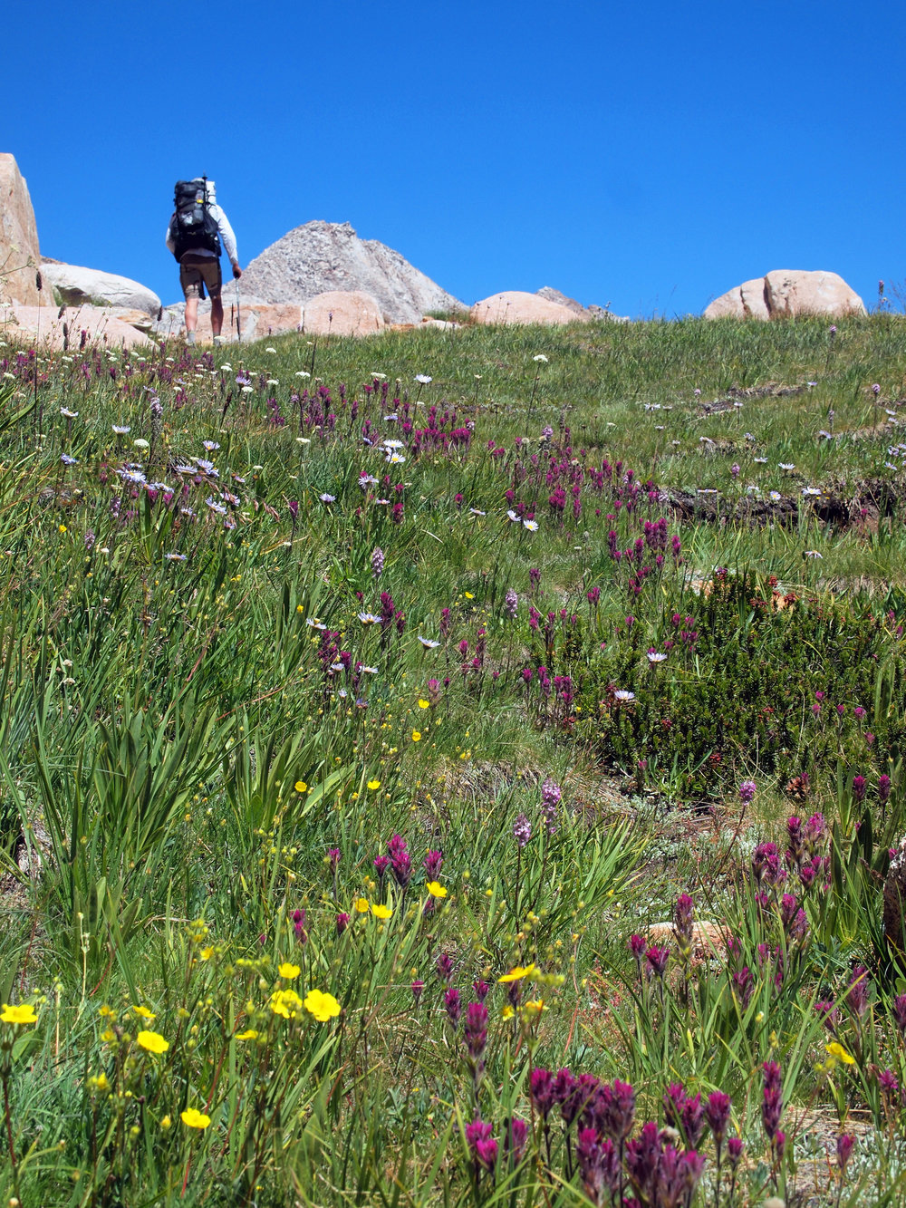 Meadow, 11,000ft, Sierra Nevada - Photo by Tim Giller