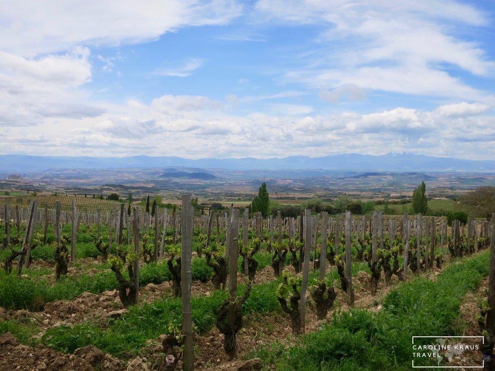 View from Remelluri Vineyard in La Rioja, Spain