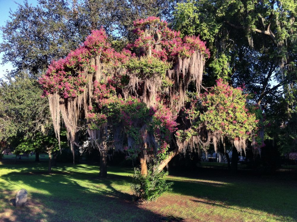 Five Reasons to Visit Savannah this Spring | carolinelkraus.com