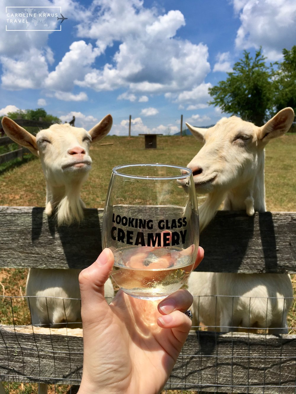 Goats at Looking Glass Creamery