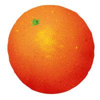 INGREDIENTS_Orange.jpg