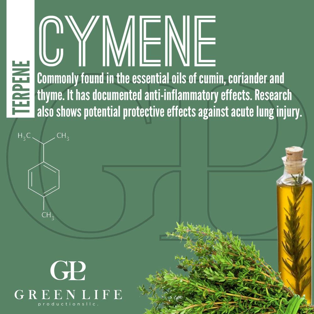 Cymene.jpg
