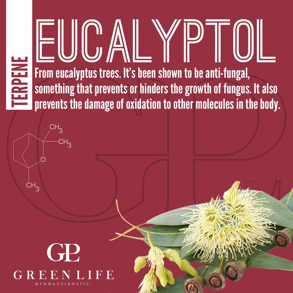 eucalyptol.jpg