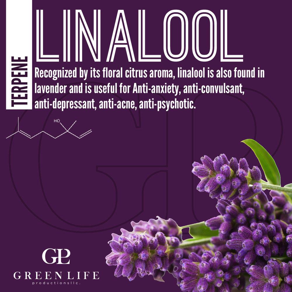 linalool.jpg