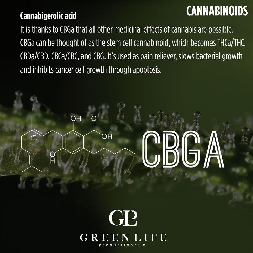 CBGA.jpg
