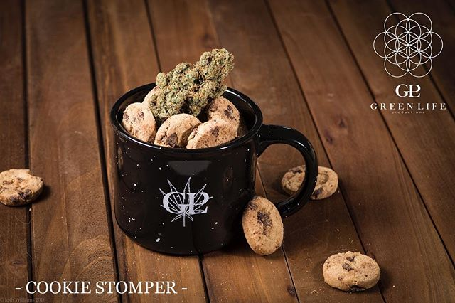 Back in stock 🤗 fresh drop 🚨 #COOKIESTOMPER 🍪 – available only @apothecarium_lv  @inyo_lv  @mmjamerica.lv  @thedispensarylv2  Henderson , @showgrow.official  @essencevegas_  Tropicana ✌️#SATIVA: Elephant Stomper X Monster Cookies. This flavorful Sativa dominant hybrid smells and tastes like grape, with an uplifting mellow head high that won't slow you down. Terpenes: High on Limonene, Myrcene, Linalool & Isopulegol with hints of Camphene 📷 @joshwills702  @joshwills 🔬 @digipathlabs #glp #greenlifeproductions #cleanmeds #livingorganicsoil  #soilfoodweb  #DEMPure #cleangreencertified