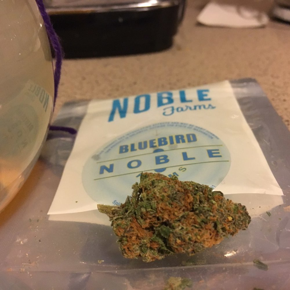"Bluebird By Noble Farms By Budtender Molly Okay Noble, I see you.  My favorite part about this package is that they didn't put their normal ""sativa, indica"" spectrum on the bag. They didn't need to. I got out by monster and pride and joy of a piece just to hit this strain. It is so skunky when you open the bag. I wouldn't be surprised if cherry pie was a parent of this strain. First bong rip, I knew instantly why they called it blue bird. I sense that it's a sativa dominant hybrid unless some creepin'  stoney wall is headed my way in the next 15."