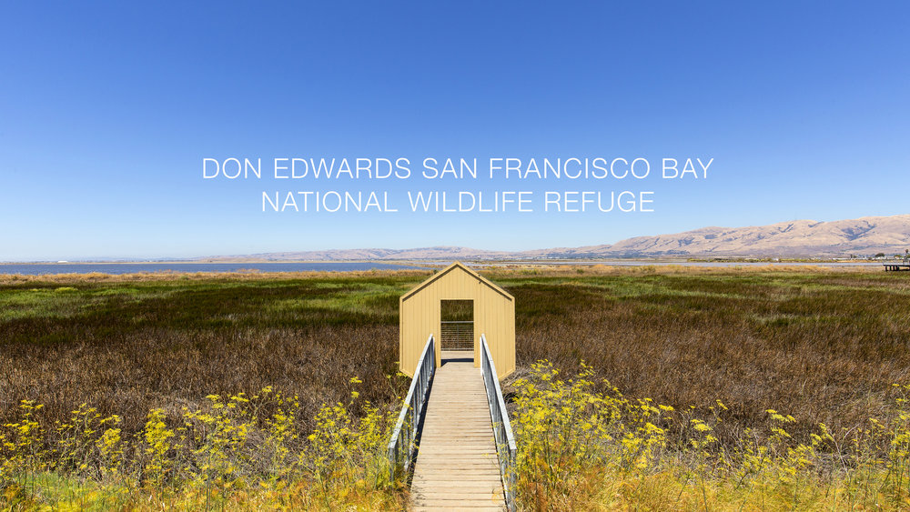 Don Edwards San Francisco Bay National Wildlife Refuge. (Ian Shive/USFWS)