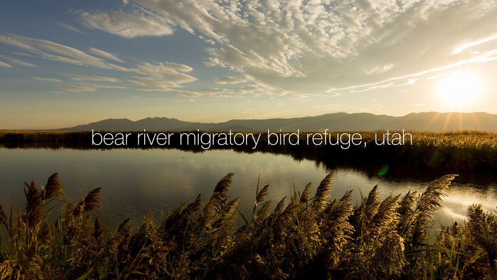 Bear River Migratory Bird Refuge near Salt Lake City, UT. (Ian Shive/USFWS)