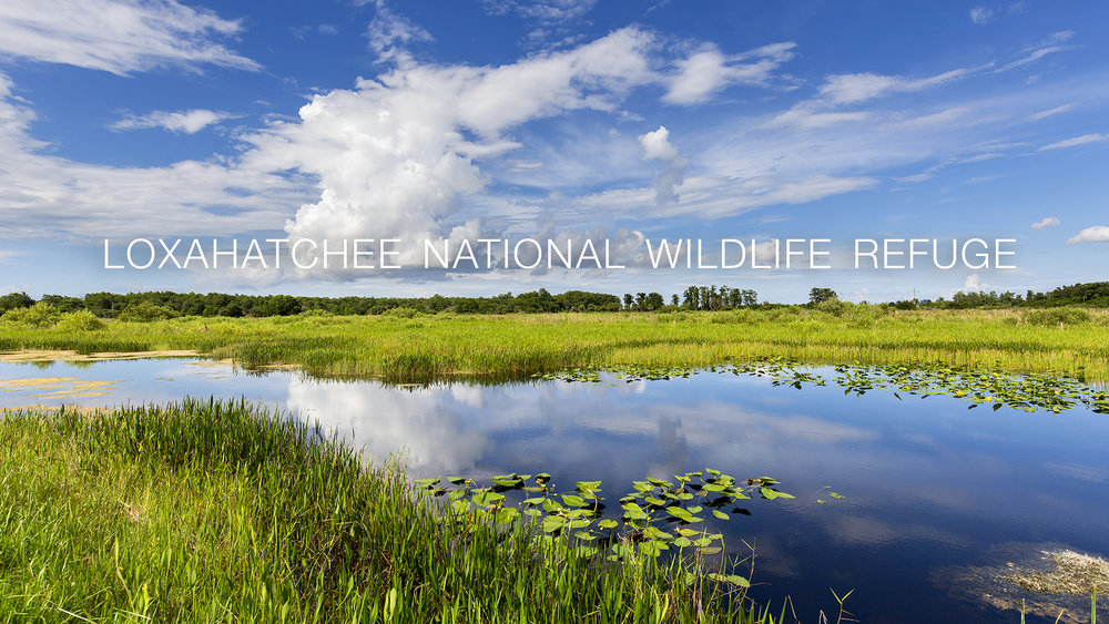 Arthur R. Marshall Loxahatchee National Wildlife Refuge in West Palm Beach, FL. (Ian Shive/USFWS)