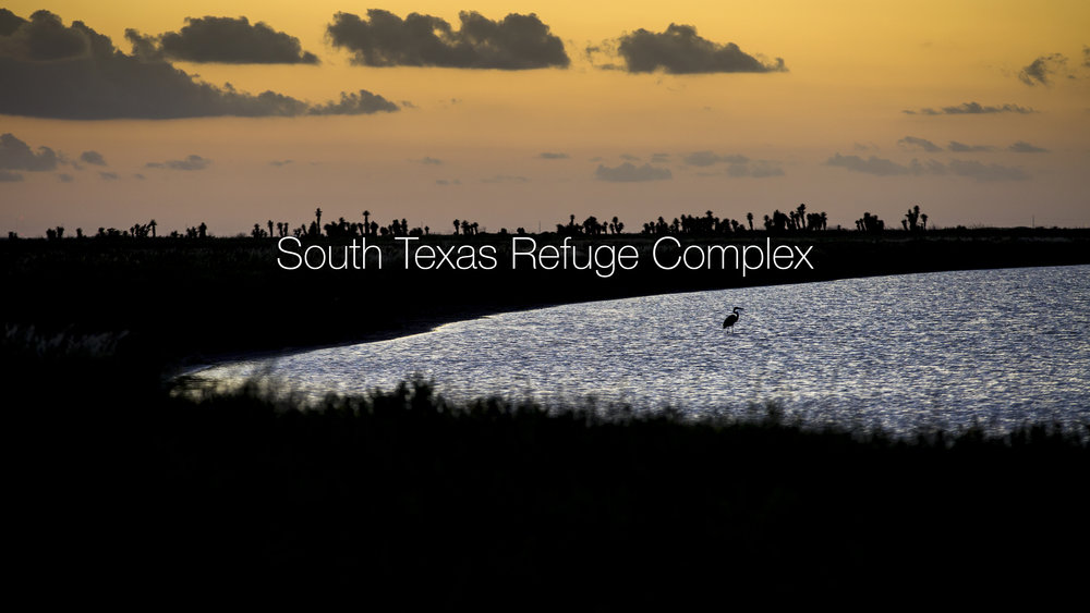 South Texas Refuge Complex (Tandem/USFWS).