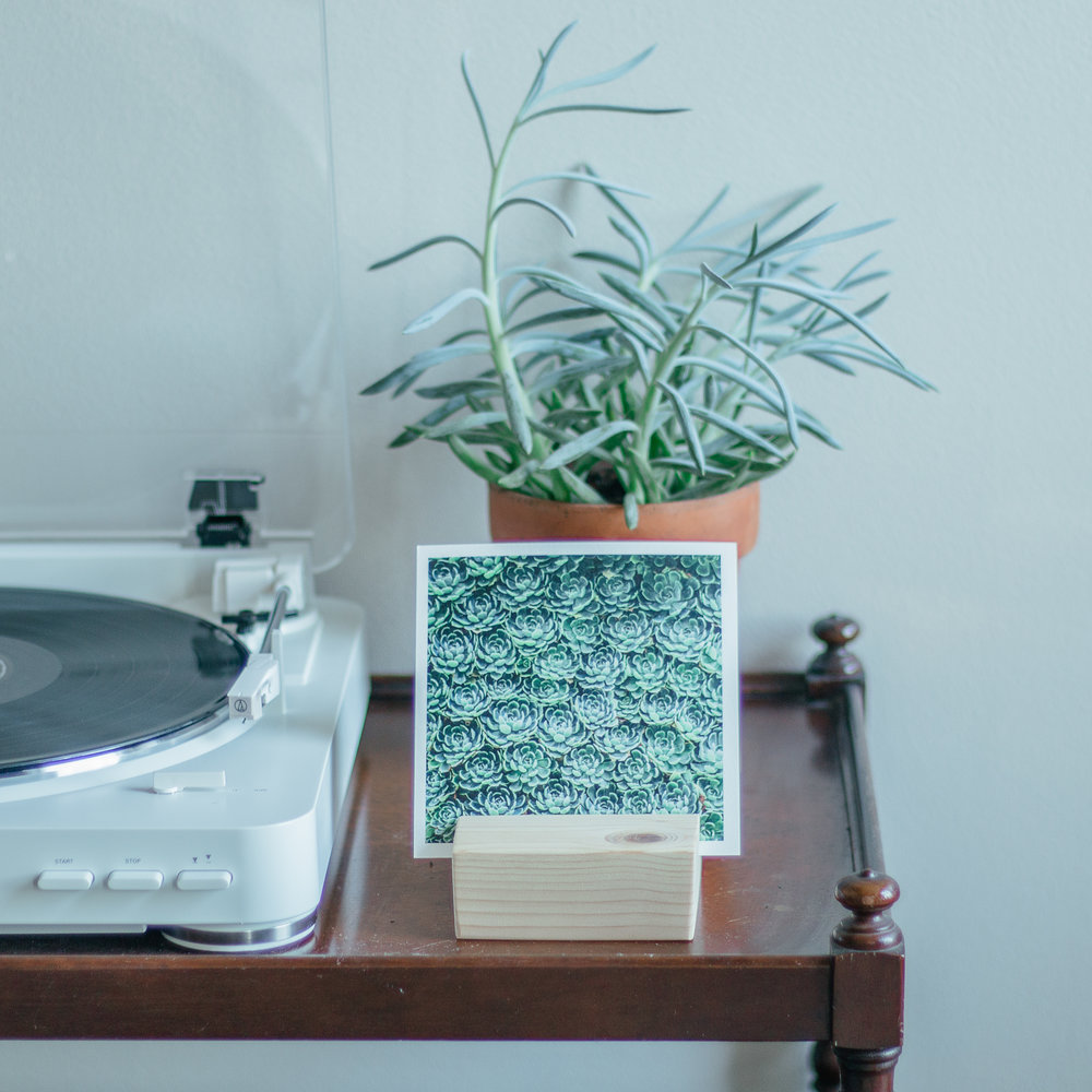 PlantSQ-5.jpg