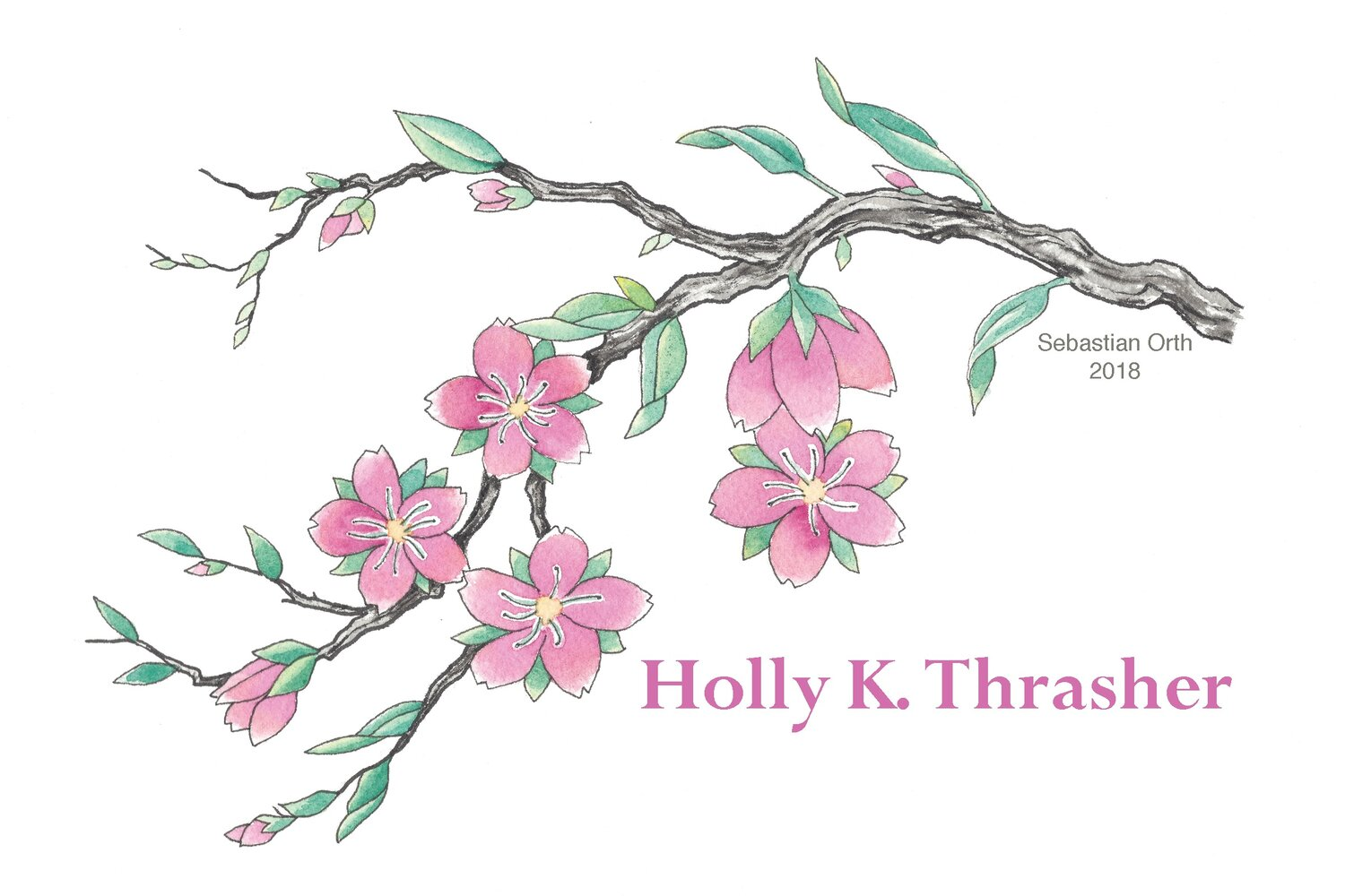 Holly K Thrasher