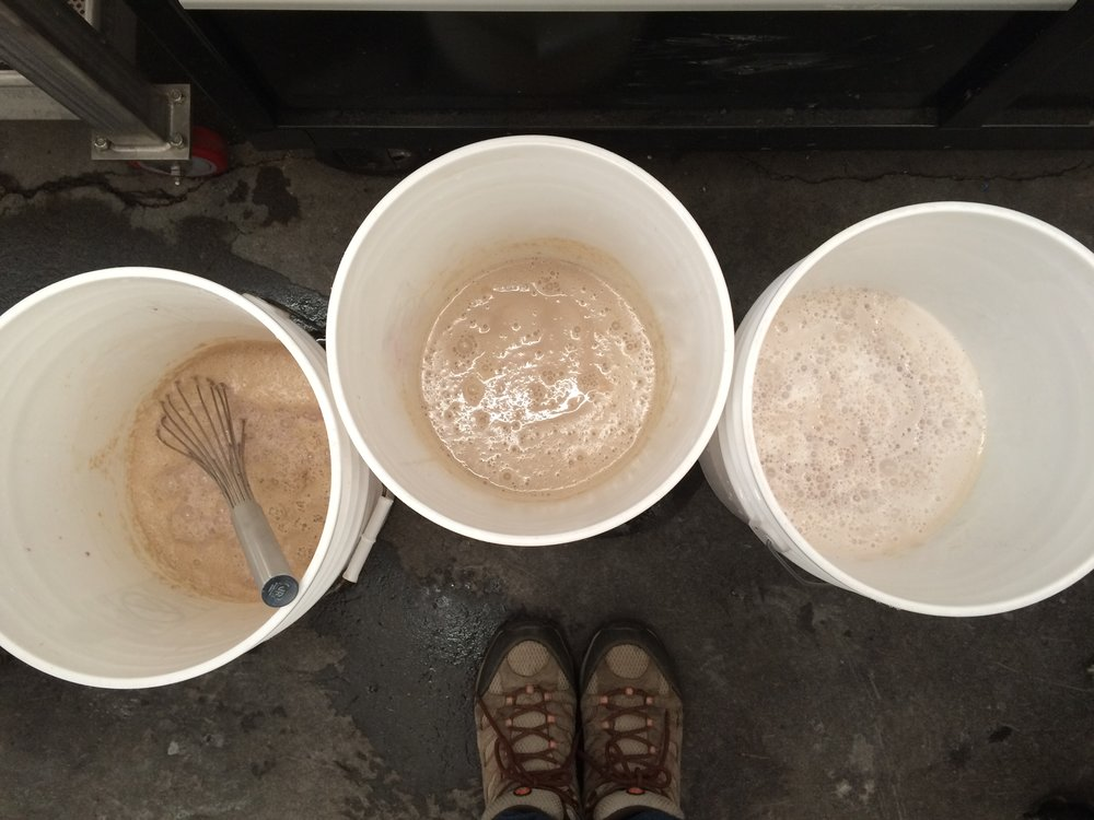 Molly's favorite harvest task - growing up the yeast. Here are three types, each with their own characteristics, textures, aromas...