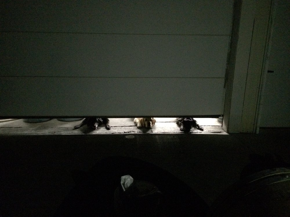Night-time at the winery, three dogs wishing they could be of help!