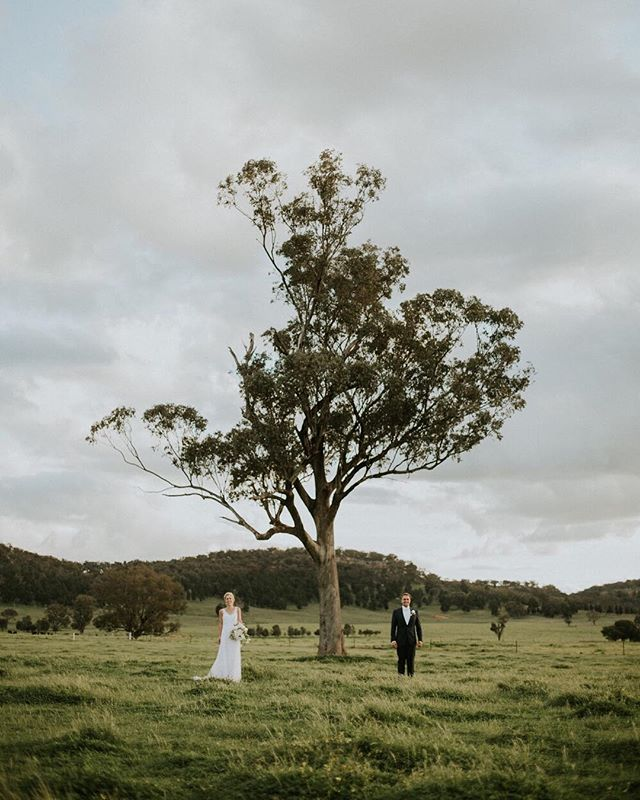 Two lovers. A field. A tree. ⠀⠀⠀⠀⠀⠀⠀⠀⠀ Magic captured by #TBAsupplier @feather_and_birch from Louise + Paul's Coolah wedding - you can check it out in the archives of our 'Real Weddings' blog! ⠀⠀⠀⠀⠀⠀⠀⠀⠀ #wedding #weddingday #ido #weddinginspo #bridetobe #style #centralwestwedding #dubbowedding #mudgeewedding #orangewedding #weddingdecor #weddingstyle #weddingtheme #whitemagazine #hellomay #loveislove #happy #relationshipgoals #married #marriedatfirstsight #thebridesavenue #bridalblog #bridalblogger #weddingblog #bride #groom #bridalgown #weddingdress #weddingwire