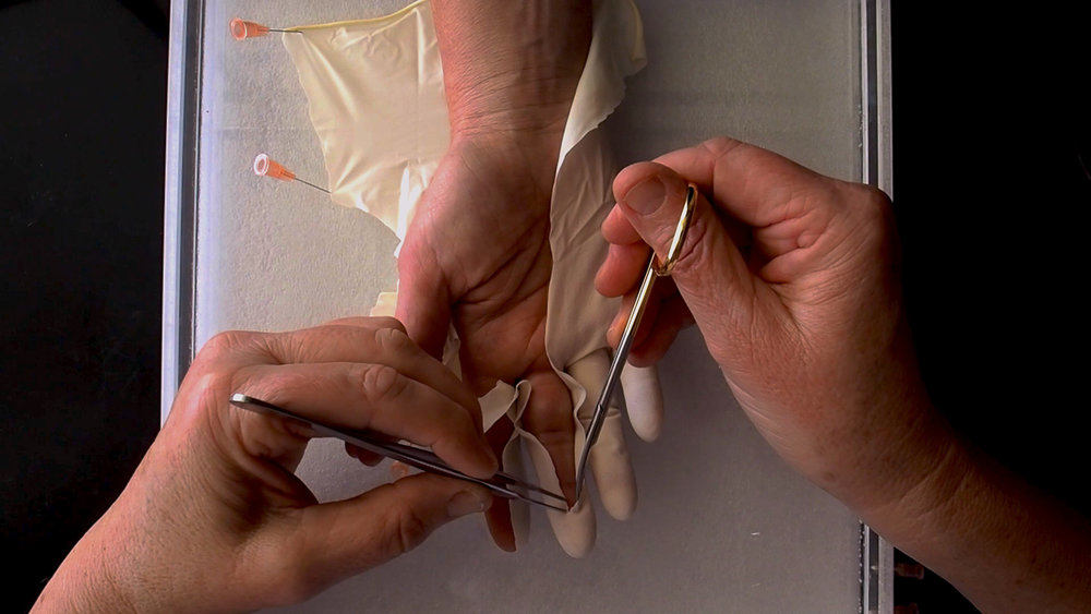 Glove Dissection: Anatomise, 2015. Digital still image from experimental film depicting skilled biomedical researcher dissecting glove from artist's hand in the Autonomic Neuroscience laboratory, School of Medicine, Flinders University.