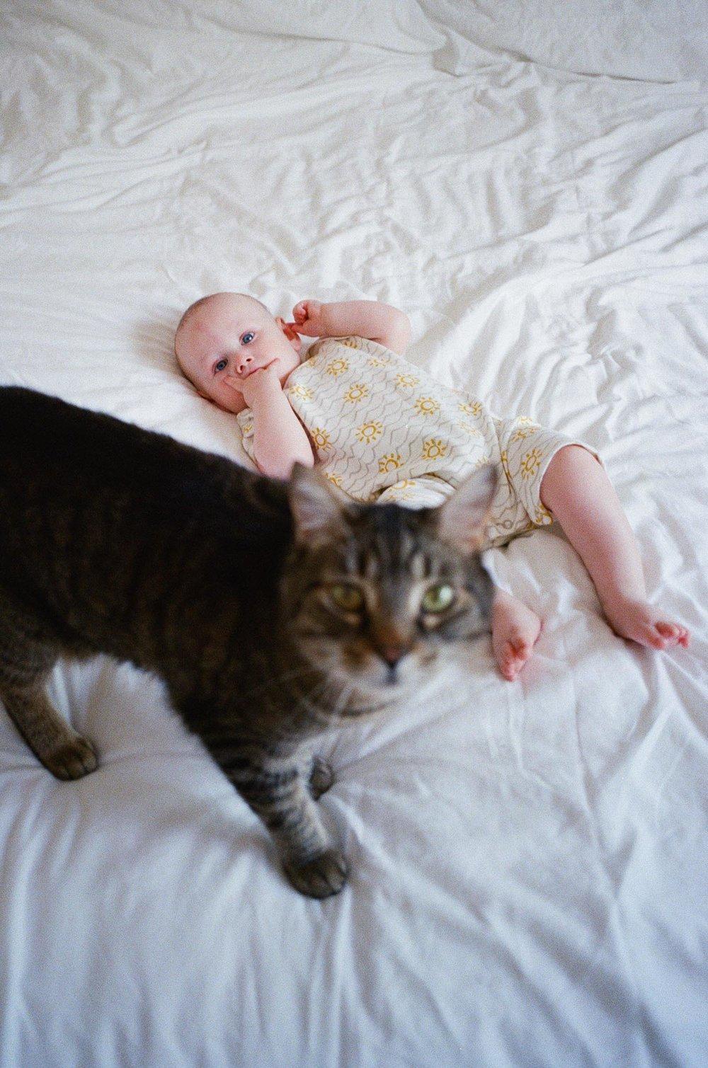 cat with baby.jpg