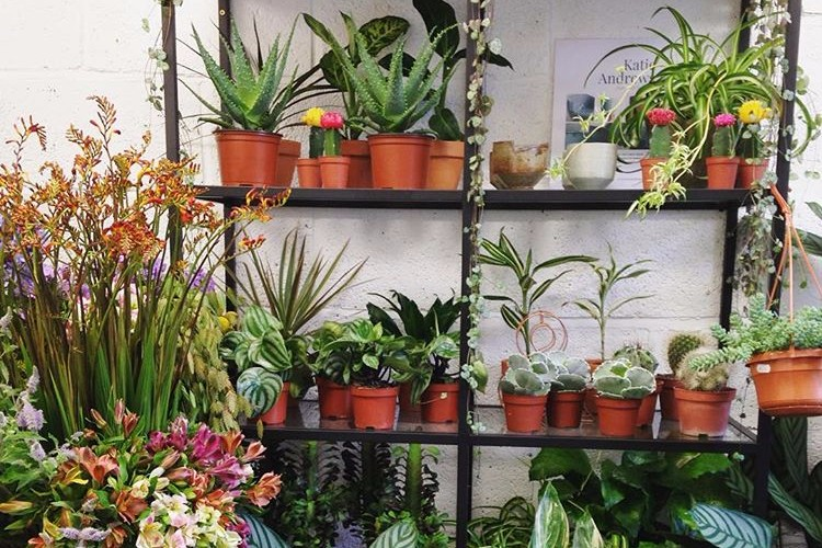 Isherwood  // Not your average high street florist, Jordan at  Isherwood  has created an urban jungle in her new Stirchley shop. They literally have a connecting door into  Caneat Cafe ,  as if you needed another reason to visit.