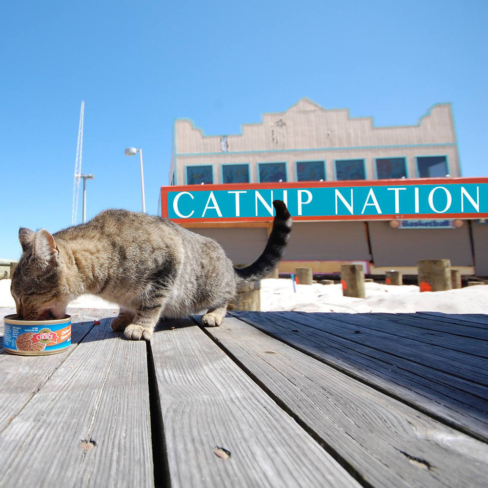 Catnip Nation