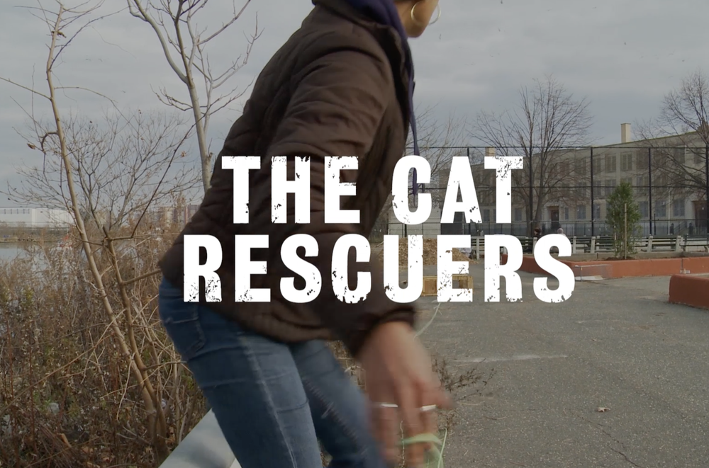 The Cat Rescuers Documentary