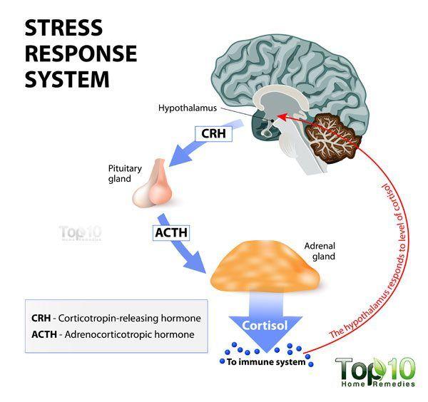 cortisol-600x564.jpg