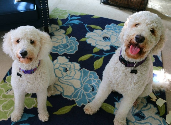 My two babies! Bitsy on the left and George on the right!