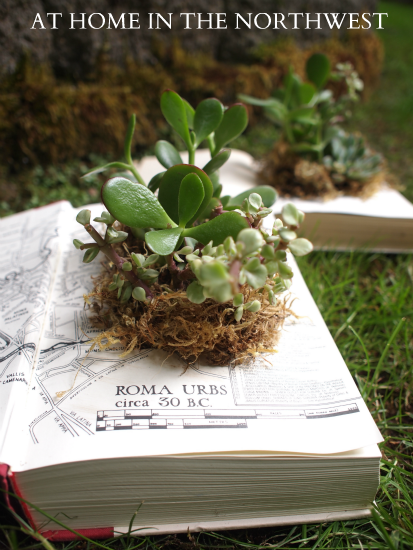 COMPLETED-BOOK-PLANT-1