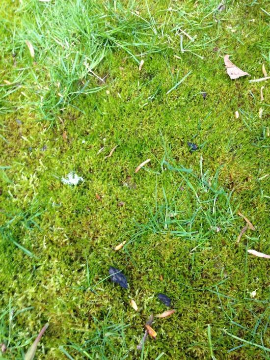 mossy grass