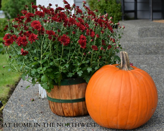 FALL MUMS AT HOME IN THE NORTHWEST BLOG