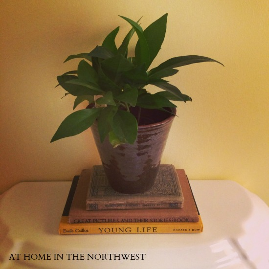 books and plant  at home in the northwest