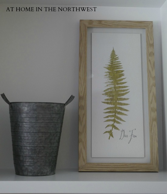 FERN AND METAL BUCKET  at home in the northwest