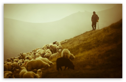 shepherd-t2